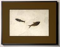 Framed Fossil